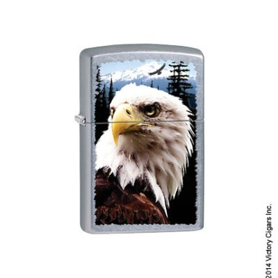 Bald Eagle 28462